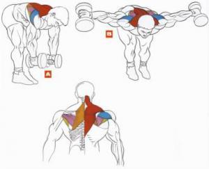 Очень мощно воздействует на плечи, а также на мышцы спины.  Кстати, исходя из этого упражнения...